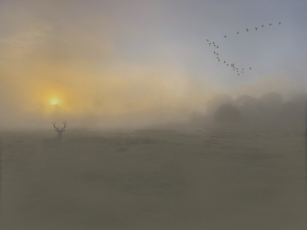Stag in the mist by shepherdmanswife