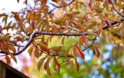 17th Oct 2020 - Autumn Colours