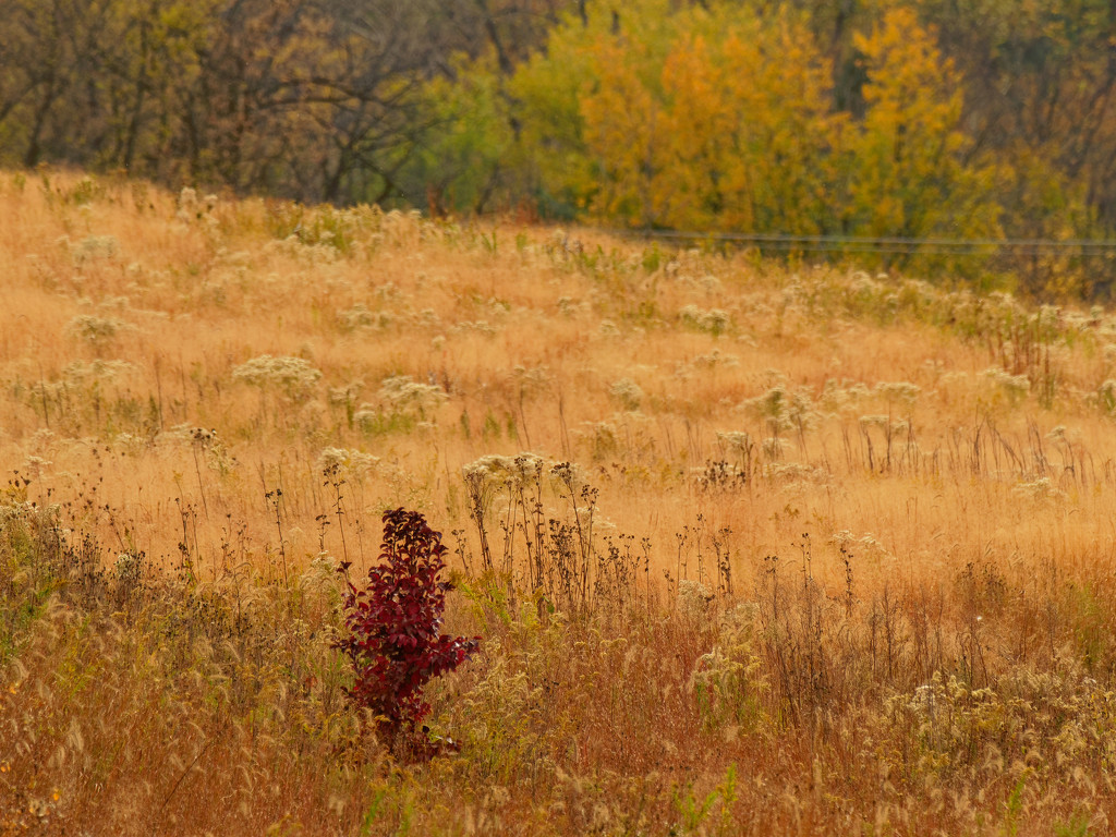 autumn prairie by rminer