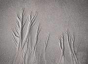 11th Oct 2020 - Beach trees
