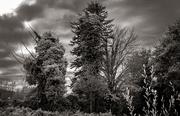 17th Oct 2020 - Trees Under Attack