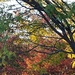 A Small Palette Of Fall Leaves