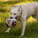 Happy Dog with It's Soccer Ball!