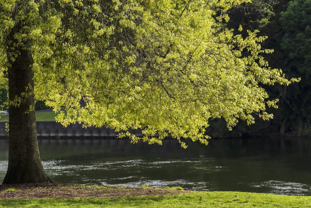 Spring Greens by nickspicsnz