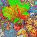 New Take on Autumn Colour