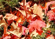 17th Oct 2020 - Autumn