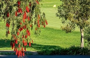 18th Oct 2020 - The putting green)