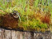 18th Oct 2020 - Miniture Woodland