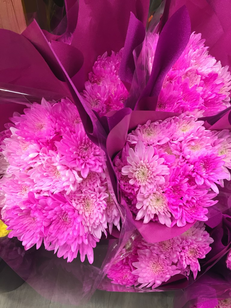 Pink bouquets  by kchuk
