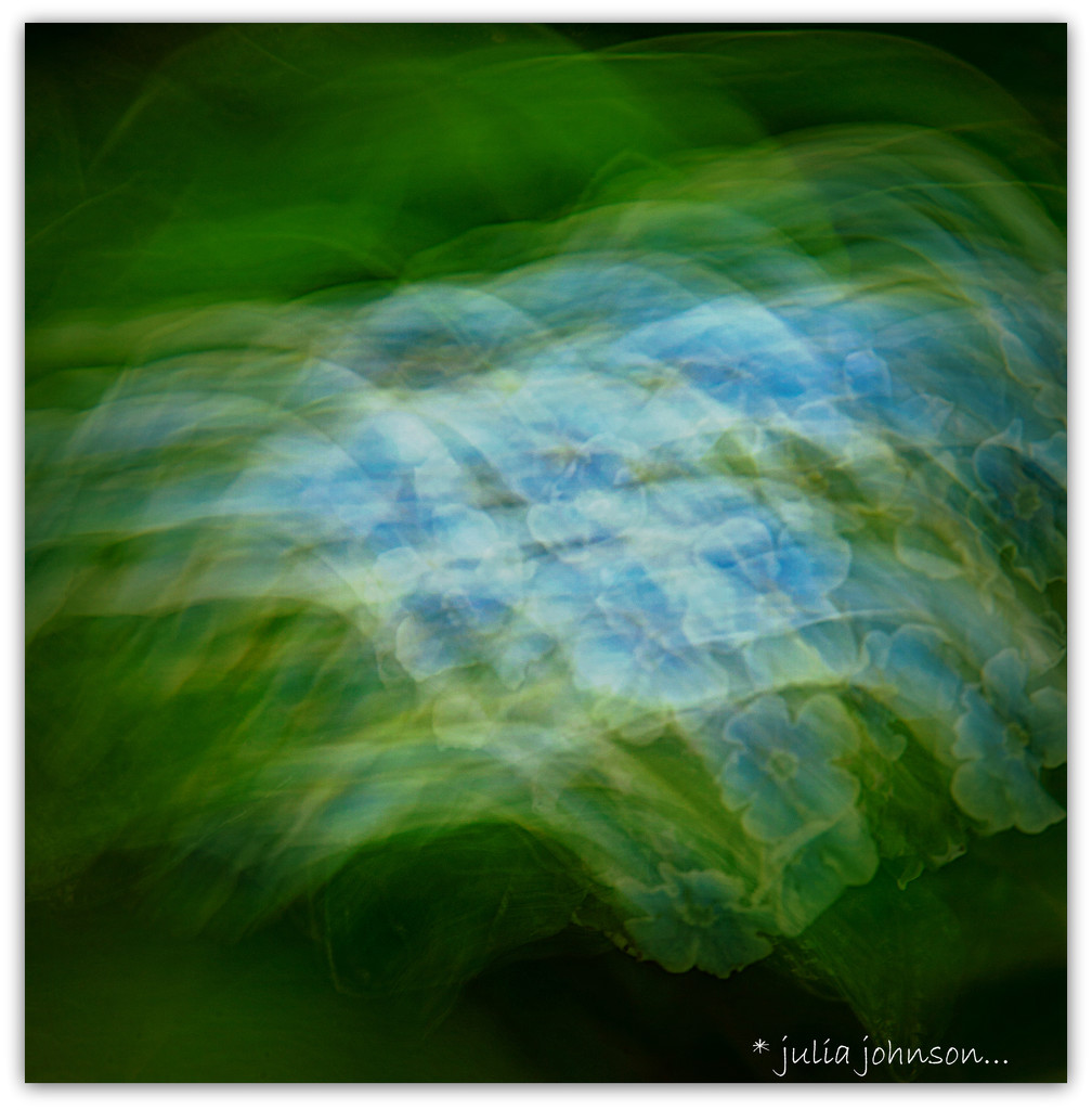 ICM Chatham Island For-get-me-not by julzmaioro