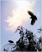 17th Oct 2020 - As The Crow Flies