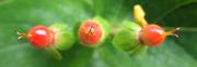 18th Oct 2020 - Three berries