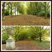 18th Oct 2020 - The Same Avenue From Different Ends