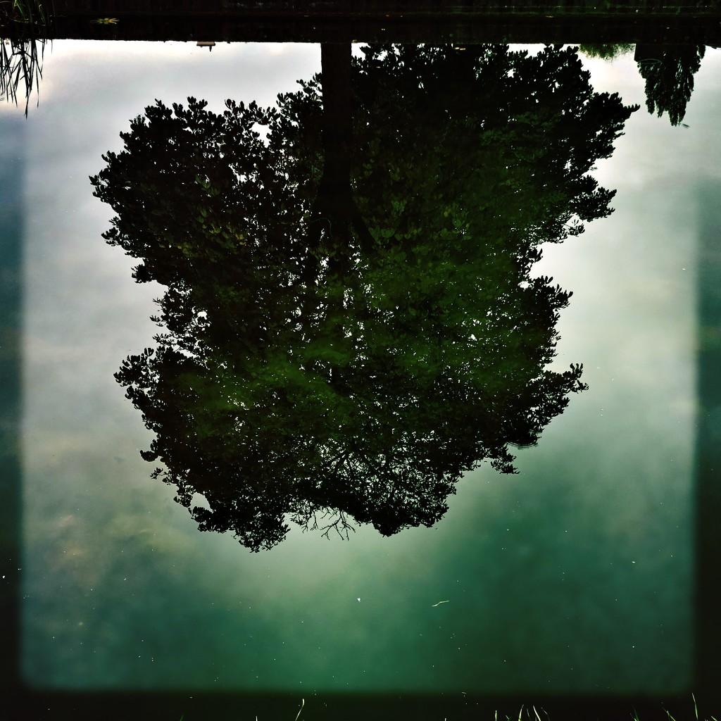 Windless by mastermek