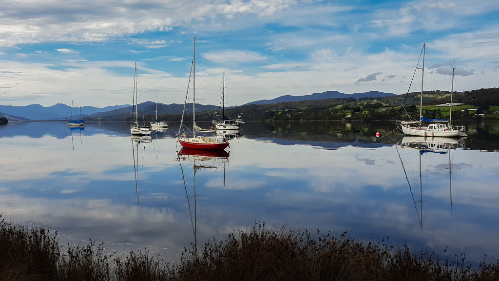 Calm waters of Huon River  by gosia