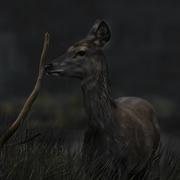 18th Oct 2020 - deer
