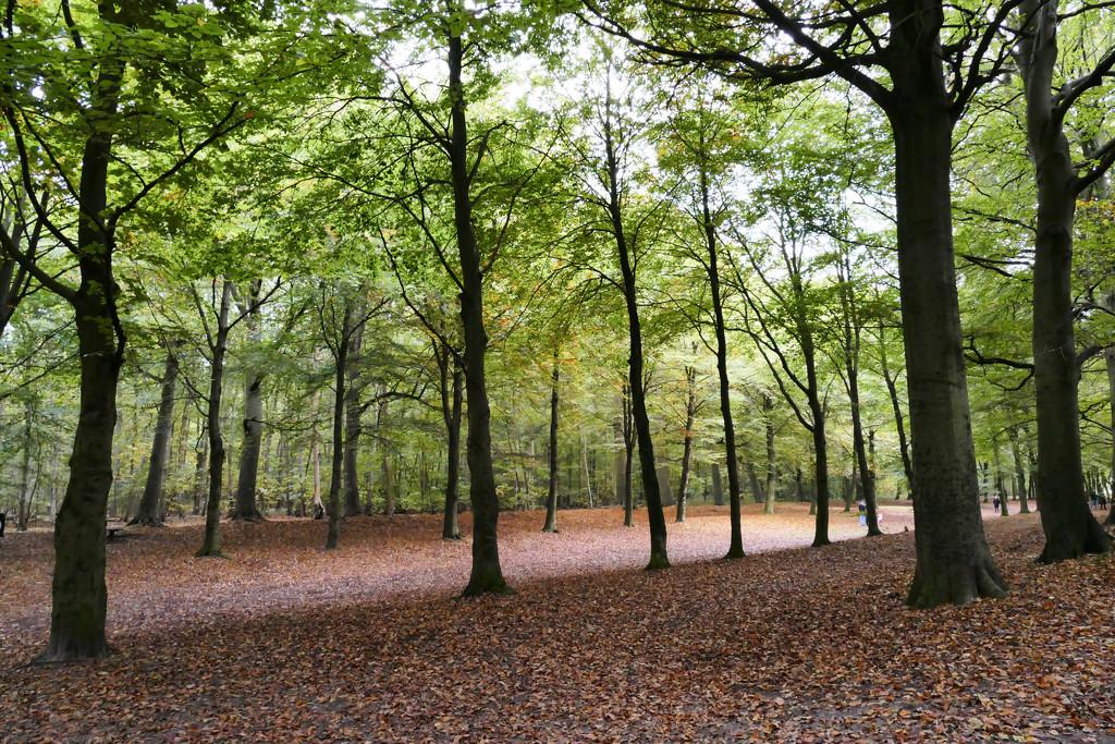 Light in the wood by marijbar