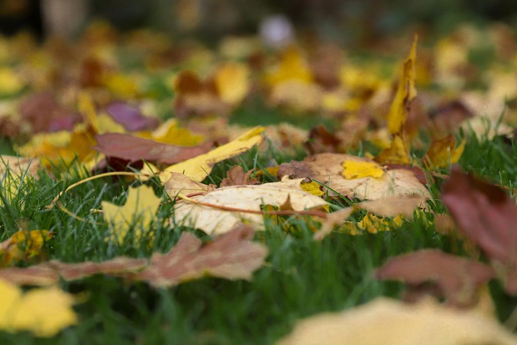 Autumn's Carpet  by phil_sandford