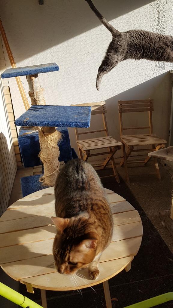 Cat photography  by katriak