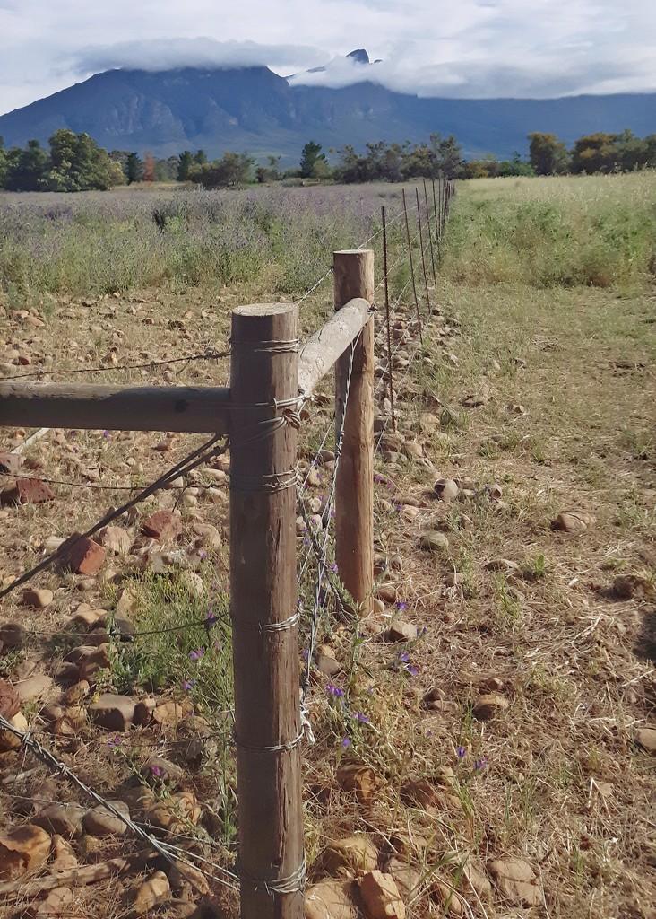 Fence line  by salza