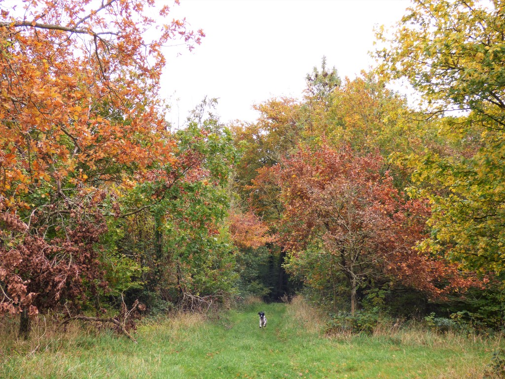Autumn... by julienne1