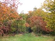 18th Oct 2020 - Autumn...