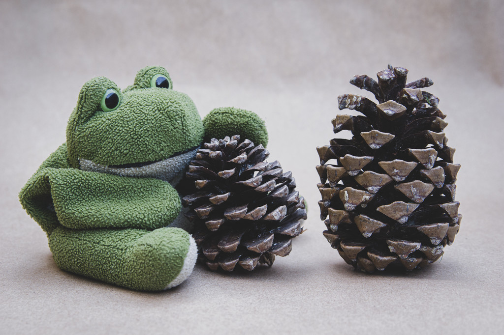 (Day 247) - Good Pinecone by cjphoto
