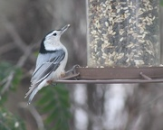 18th Oct 2020 - At The Feeder