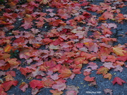 18th Oct 2020 - Want to Kick Some Leaves?