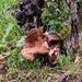 Fungi - 3