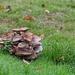 Fungi - 6