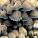 Myriad of Mushrooms