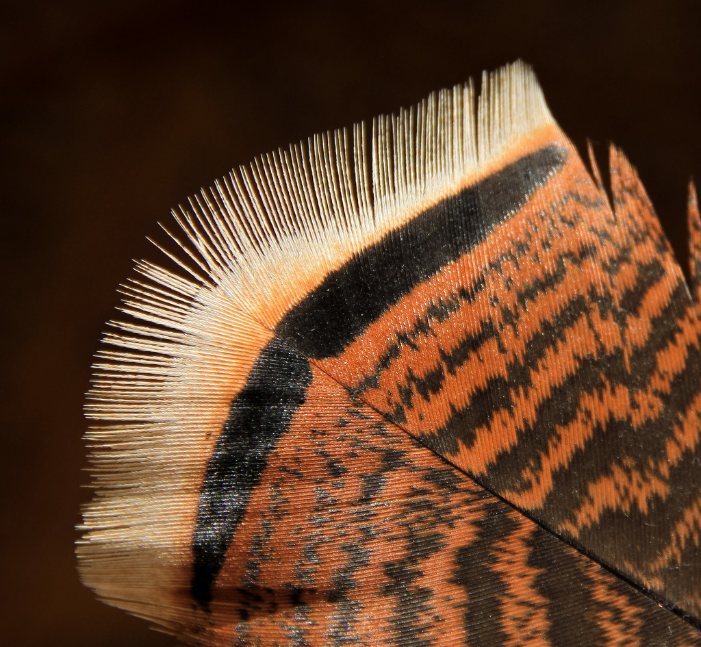 Feather by sherimiya