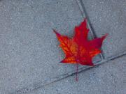 18th Oct 2020 - autumnal