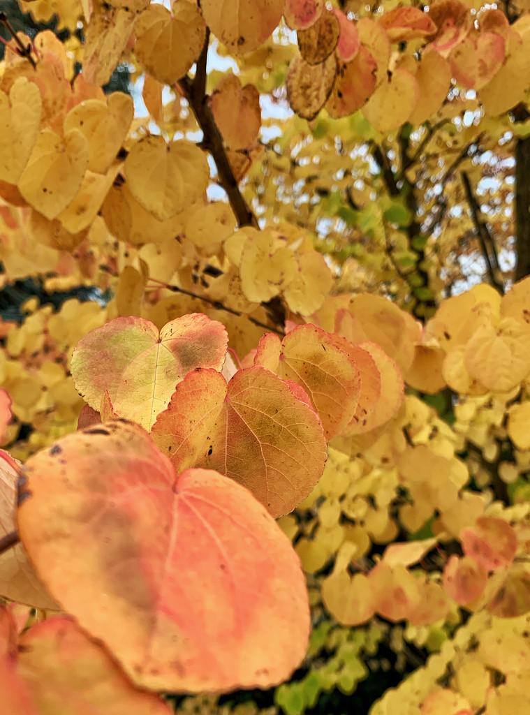 Color of autumn.  by cocobella