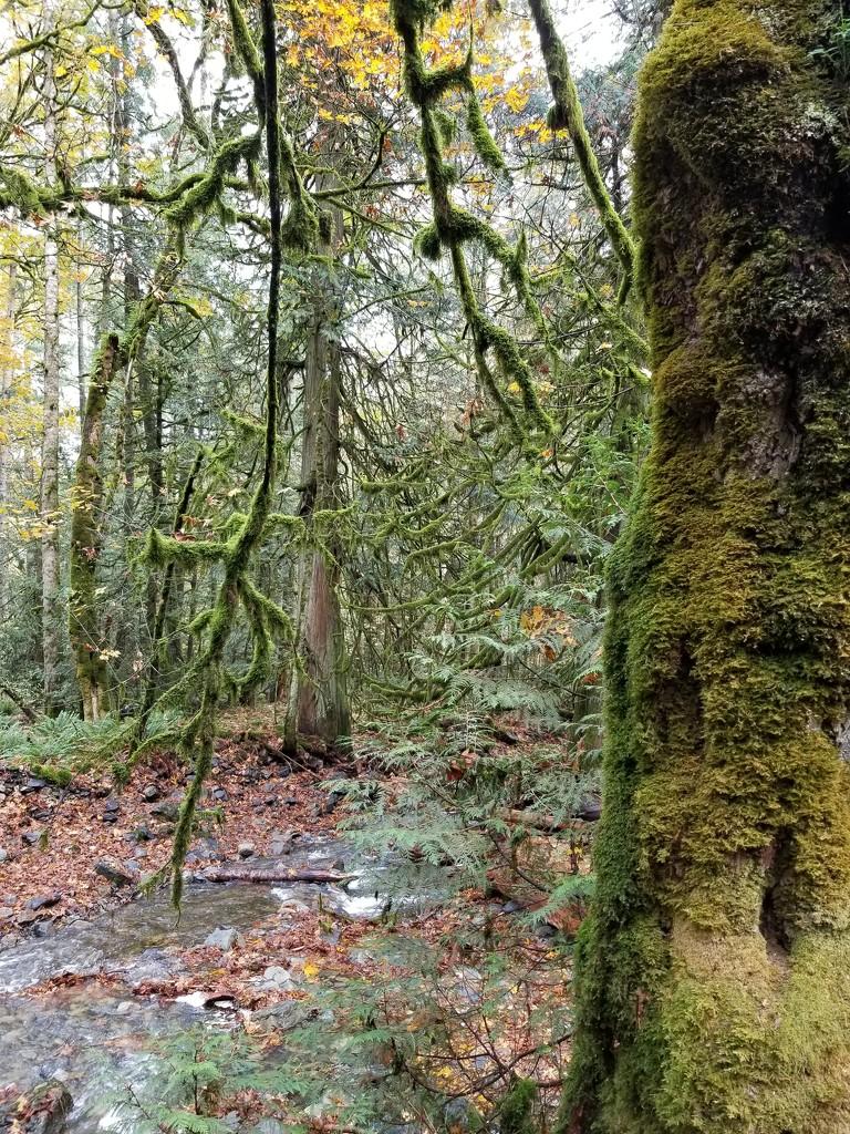 Rainforest Walk by kimmer50