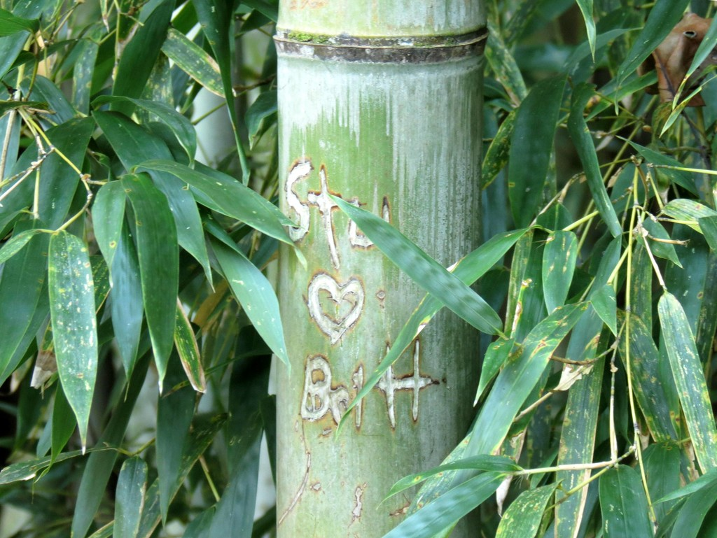 Love In the Bamboo Forest by grammyn
