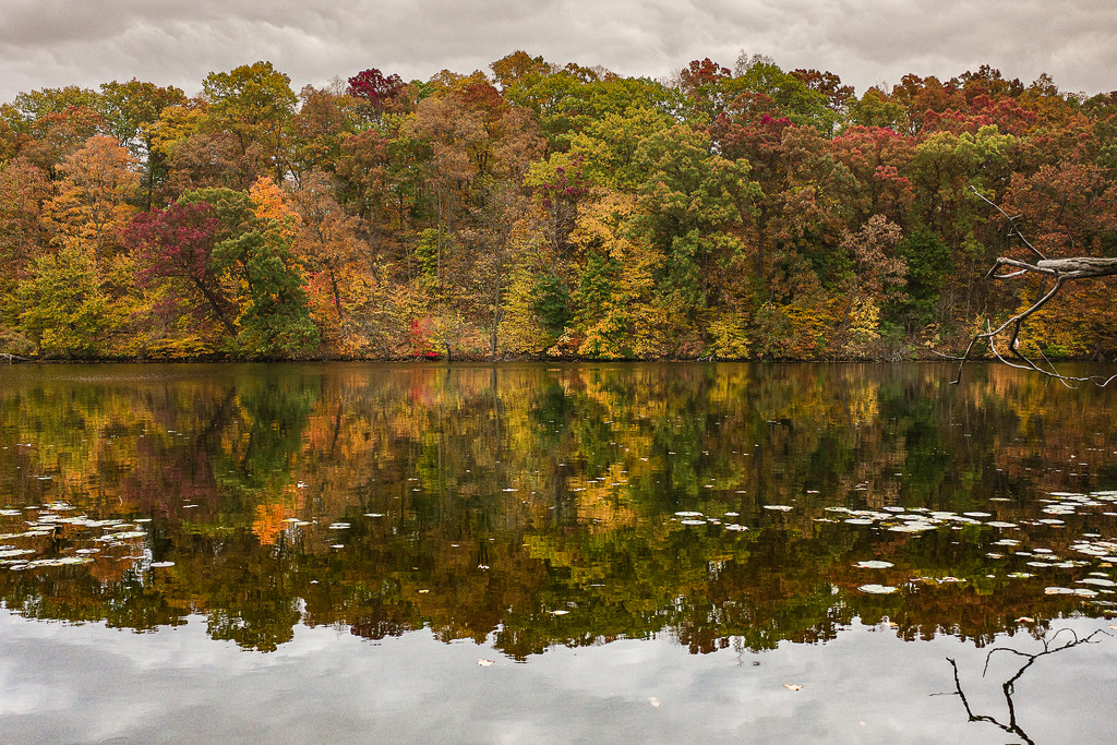 Fall Colors by vera365