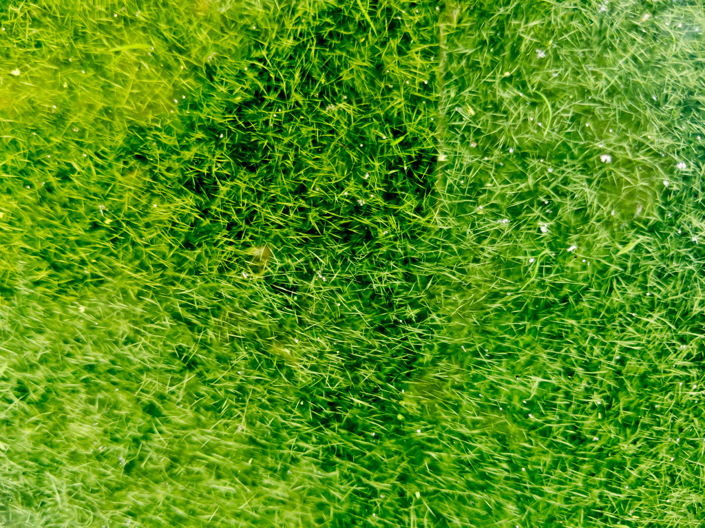 Algae Bloom by mallocarray