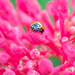The maze and the lady beetle by dutchothotmailcom