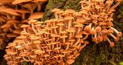 18th Oct 2020 - Lots of Fungi!