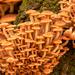Lots of Fungi!
