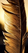 18th Oct 2020 - Feathers