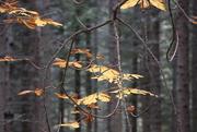 19th Oct 2020 - Autumn
