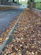 17th Oct 2020 - Slippery pavements