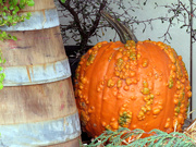 19th Oct 2020 - Colorful Pumpkin