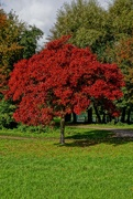 18th Oct 2020 - IN AUTUMN GLORY