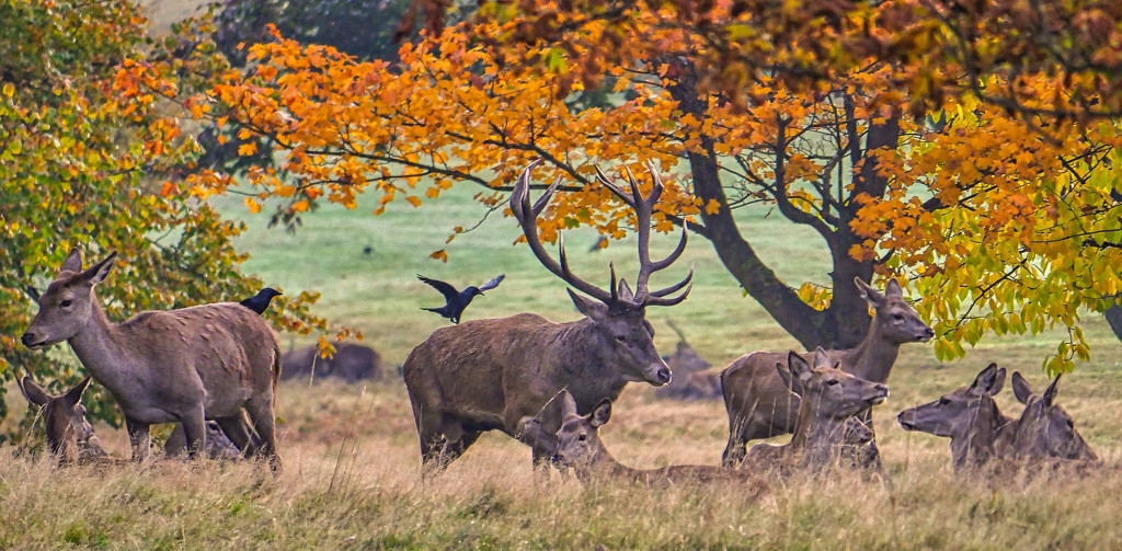 Stag & Hinds. by tonygig