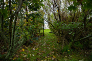 19th Oct 2020 - Back Garden