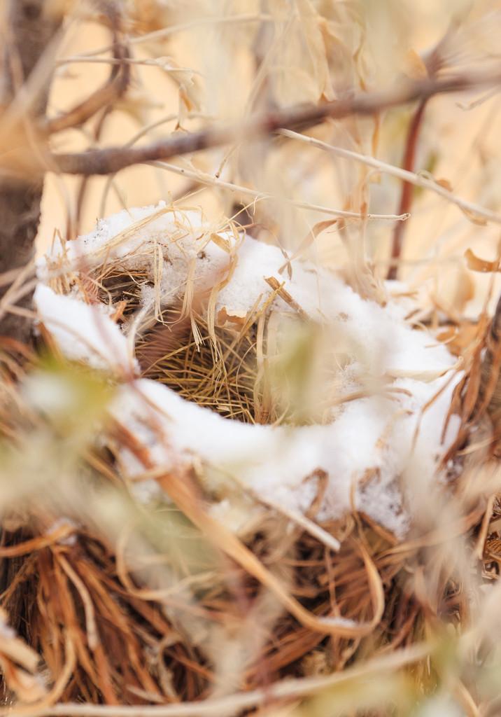 snowy nest by aecasey